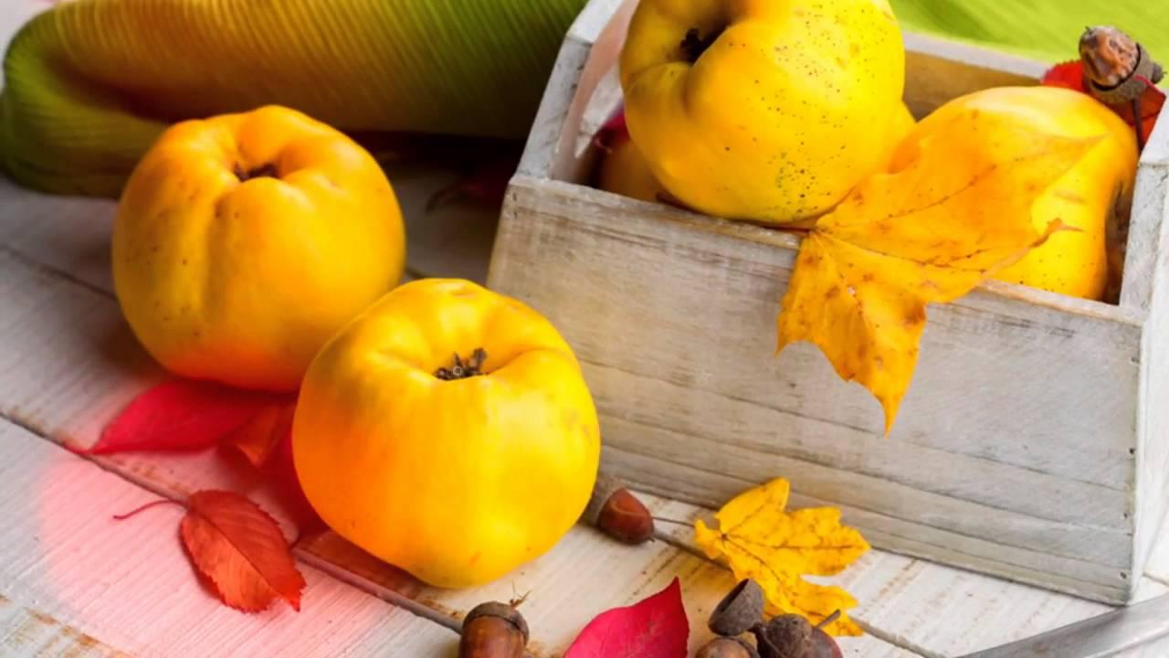 Սերկևիլը մաքրում է աղիները, բուժում է լյարդի հիվանդությունները, շաքարային դիաբետը, հազն ու մրսածությունը