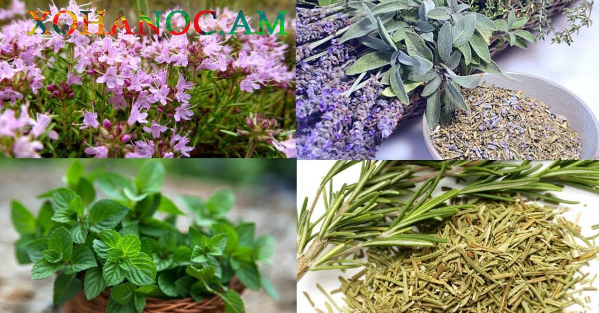 6 հզոր բույս, որոնք օգնում են ազատվել մկանային ցավից և այտույցներից