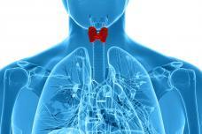 Վահանաձև գեղձի հիմնական գործառույթներն ու հիվանդությունները: Գրում է med.tert.am-ը